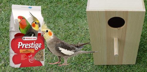 Image de Nourriture et accessoires pour grandes perruches