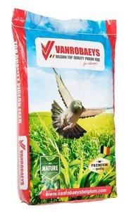 Vanrobaeys pigeons petite race